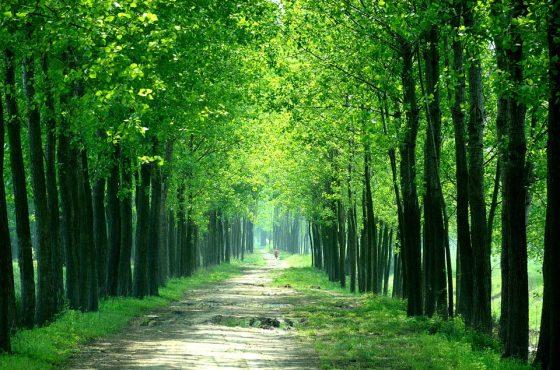 Greenway nel Devonshire