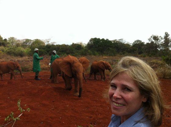 Cuini e gli elefanti in Kenya