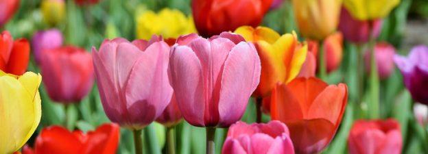 colori estate fiori